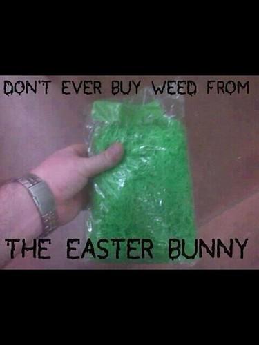 bunnyweed