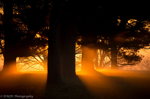 morning trees light fog sunrise golden nationalparks magichour goldenhour valleyforge pennyilvania