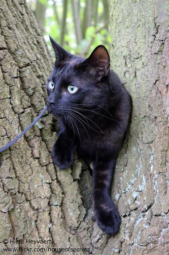 Loa climbing a tree