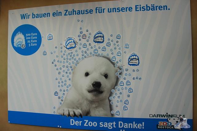 Eisbär Fiete im Zoo Rostock 04.05.2015 118