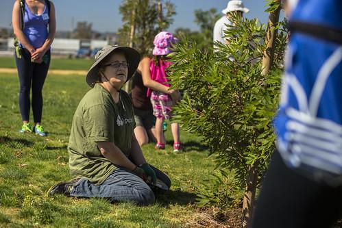 Big Sunday on a Saturday Sun Valley Tree Care - 5/2/15