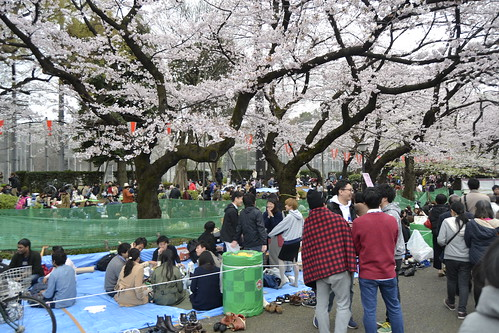 Picnic no Festival de contemplação das flores cerejeiras em Tóquio