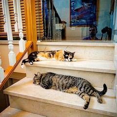 Pilladas! #desiesta #marmolfresco #catsoftobago #alpha7m2 #catsofinstagram #itziandlego #itzithecat #legothecat #legoanditzi #gatos #pets #animalitos #caloring #retratofamiliar