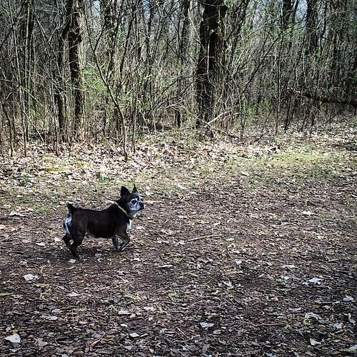 Petey #dogpark