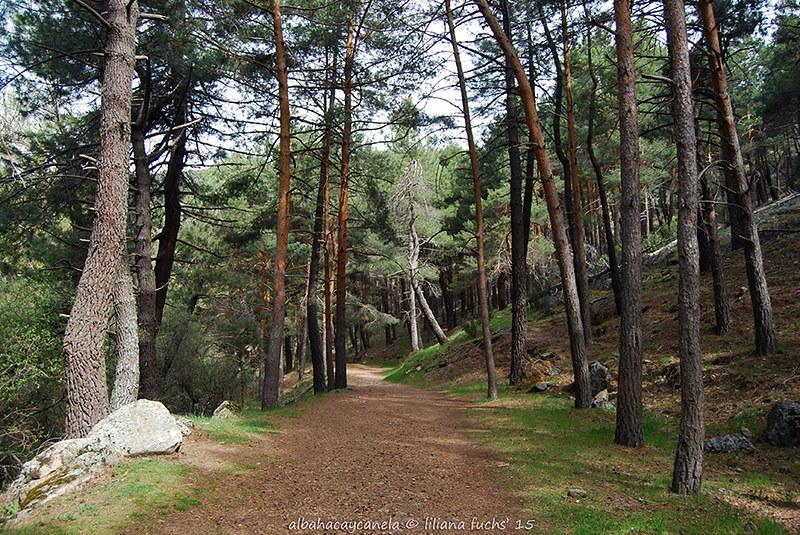 Ruta Senda del Hornillo - Madrid