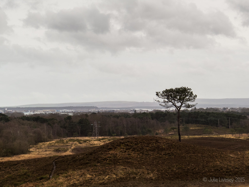 A bit of a dull afternoon on Upton Heath