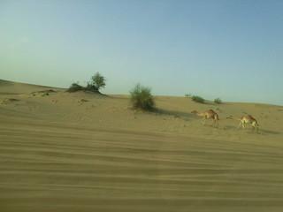die erhaltene Einladung nach Dubai 6498