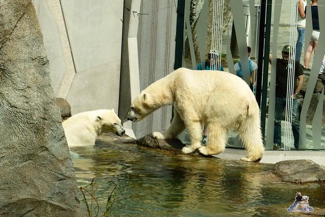Tierpark Schönbrunn 16.04.2014 107