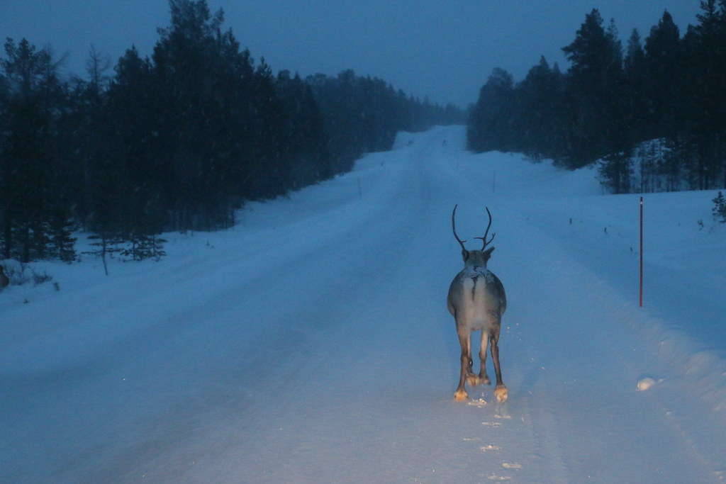 Finland301