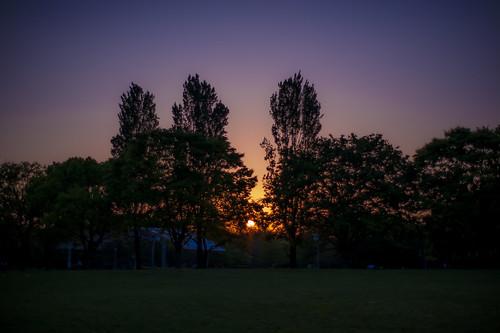 park blue sunset shadow sky orange sun tree green grass silhouette japan zeiss t landscape 50mm nikon f14 horizon 14 carl osaka gradation 50 planar tsurumi zf ryokuchi planart1450 zf2 d3s