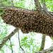 Bees swarming by Lars Plougmann