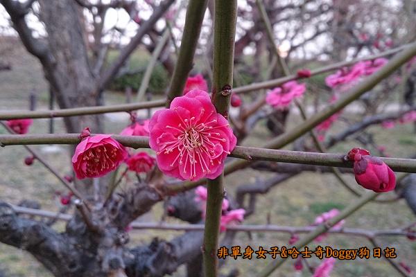 日本大阪城公園梅林城天守閣3D光之陣04