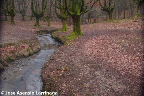 Hayedo de Otzarreta Parque Natural de Gorbeia 2015 #DePaseoConLarri #Flickr -054