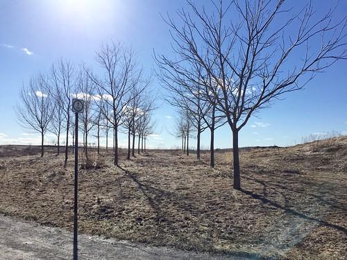 A tree line-up
