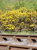 The Middleton Railway in Spring