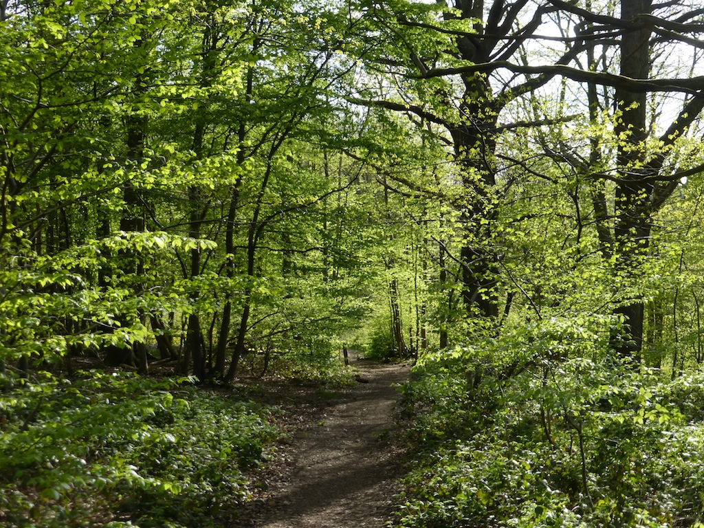 North Downs Way near Cuxton in April