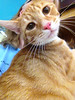 Simba is a playful, talkative, and affectionate kitty looking for a new home!
