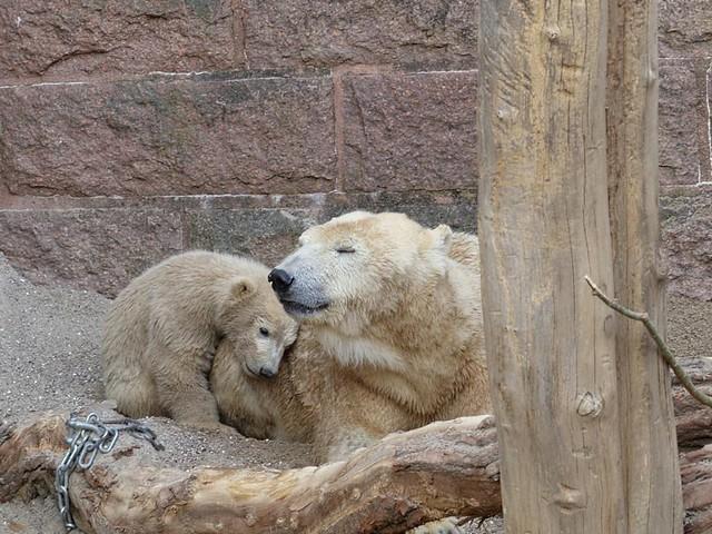 Zoo Rostock - 30.04.15