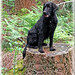 (6A/12 Missy) I'm the Queen of the Jungle by Missy2004
