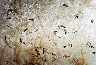 Dead Dirty Seeds