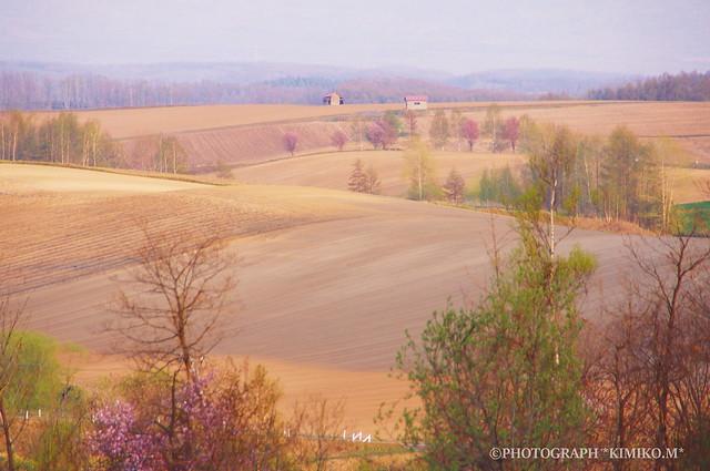 さくらのある丘風景2