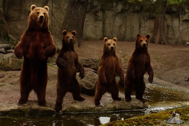 Tierpark Hagenbeck 25.04.2015   42