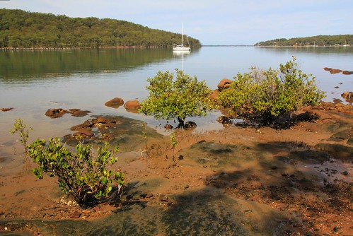 Bundabah Point Near Tea Gardens, NSW 17.4.2015