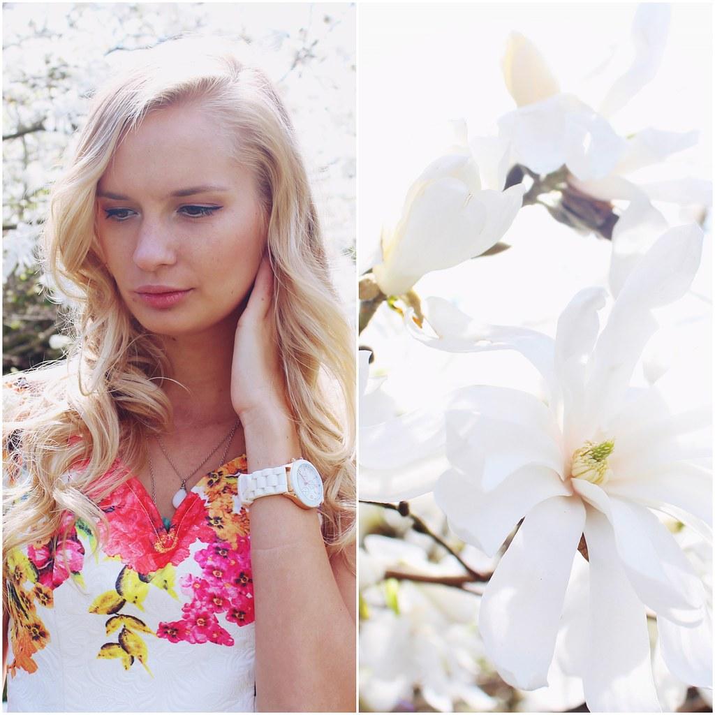 magnolia-in-spring