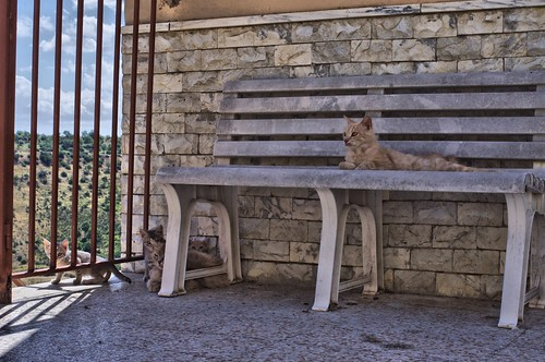 Cats of Montemilone