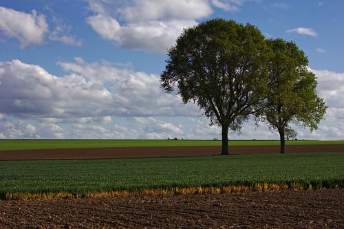 landscape fields landschaft acker morsan