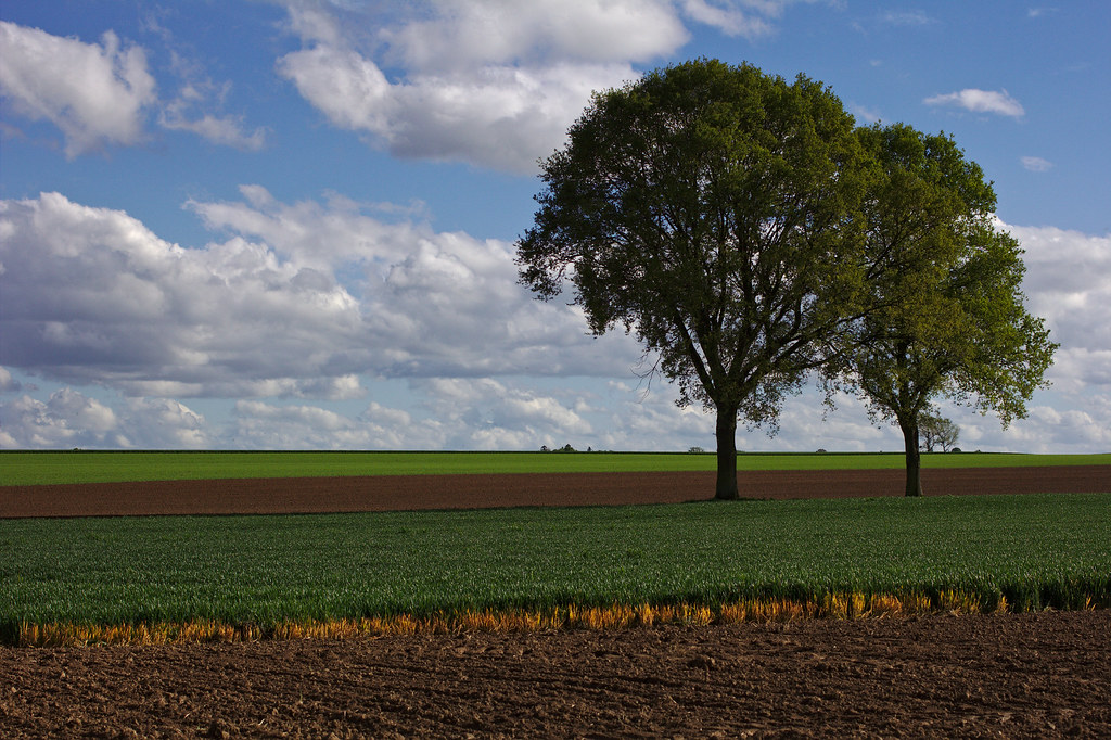 Colours on the fields