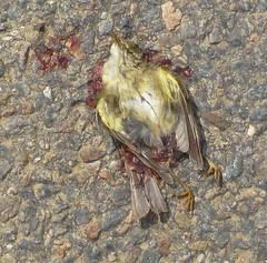 Fragile crash victim