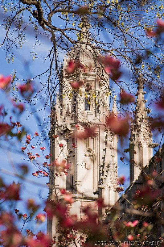 WUSTL Graham Chapel in Spring