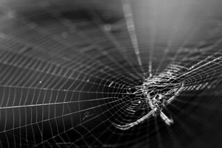 Spider Web 2..