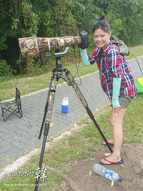 Birding in Pasir Ris