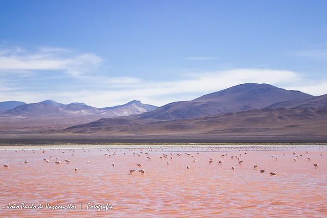 Laguna Colorada - Bolívia