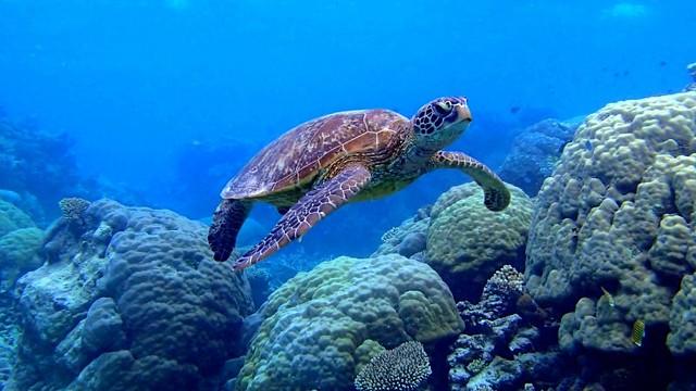 v-coral reef