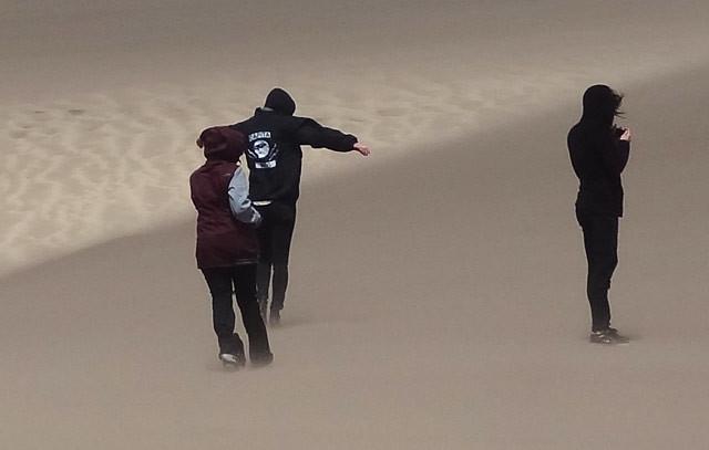 wind-park-dunes