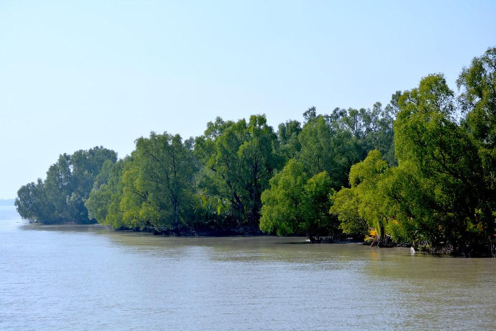 Sideview.Sundarbans