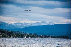 Zürcher See