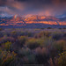 Range of Light by Alex Noriega.