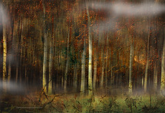 The Forest Series
