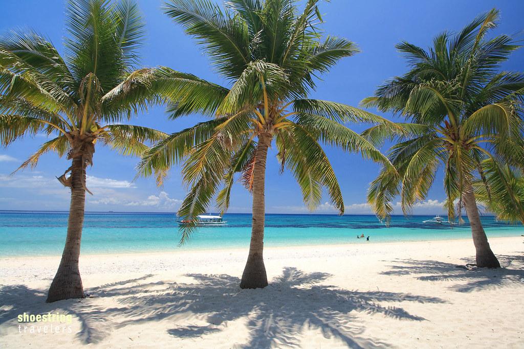 a trio of coconut palms at Kalanggaman Island