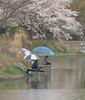 Photo:P4050050_1 By kushii