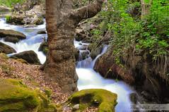 Banias Falls 2