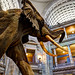Smithsonian Museum Of Natural History by Sunny Moon's Photos