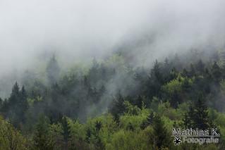 Nebelschwaden im Wald