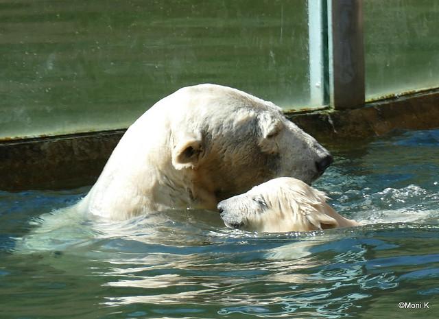 8-bald wird sie mit Mama im Wasser herumtollen