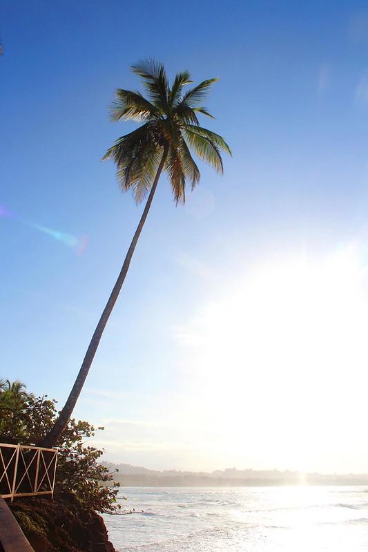 Palme in Costa Rica