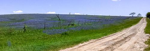 texas unitedstates tx palmer h wildflowers ennis he bluebonnets bluebonnettrails